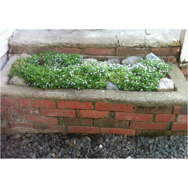 Brick Planter Box Ideas: Built-in Brick Planter With River Rock And Steppables