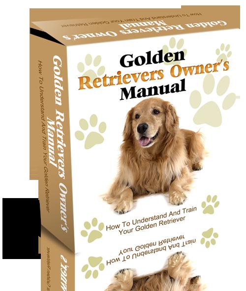 Golden Retriever Website Template PLR Package | Dog Training