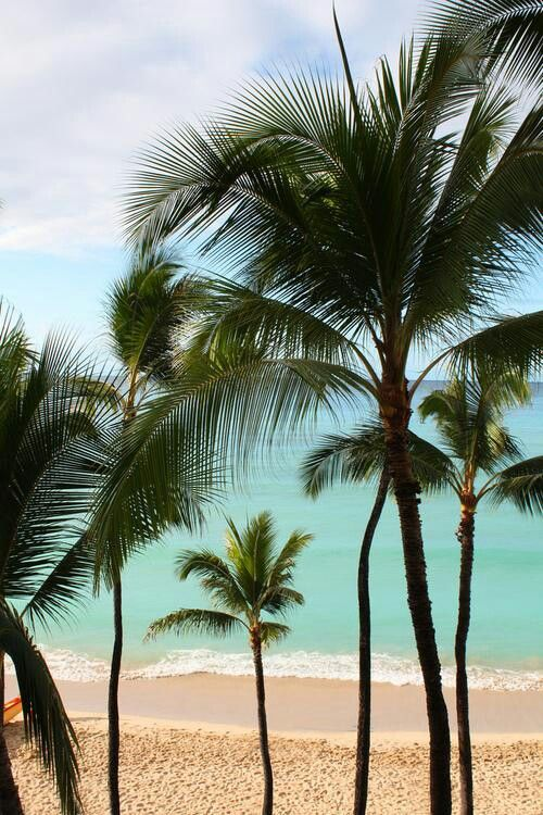 Palms at the beach.