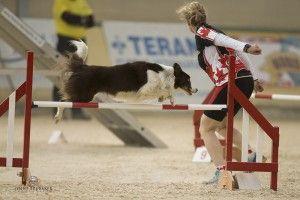 Agility Handling From Susan Garrett Dog Agility Dog Training