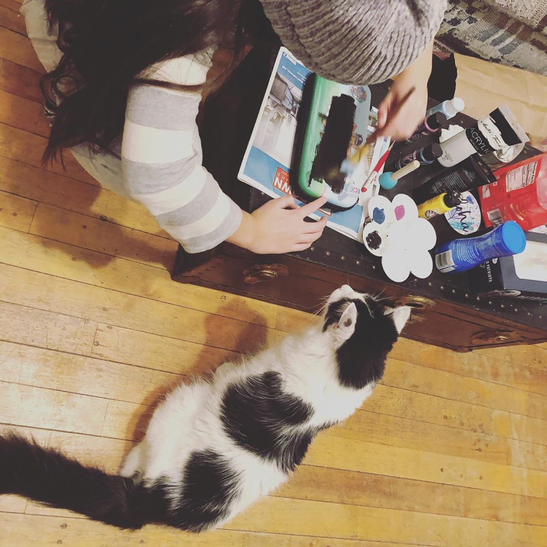 What Are You Doing Can I Help Catsofinstagram Cat Curiouscat Diyproject Curious Cat Cats Cats Of Instagram