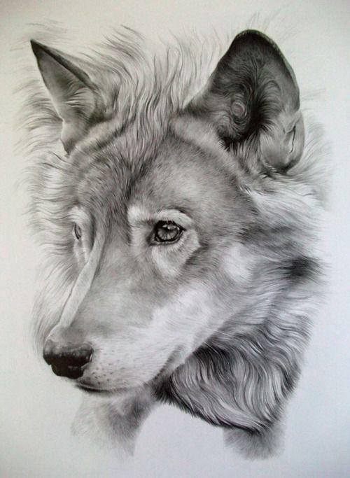 Lobo a lpiz  Dibujos  Pinterest  Lpiz y Dibujo