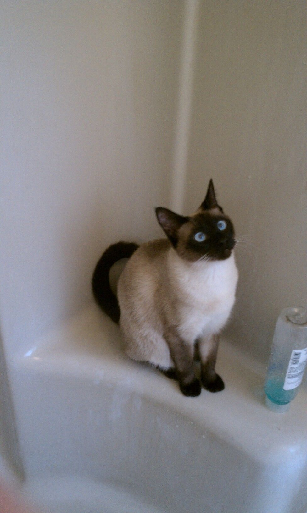 My cat Daizie