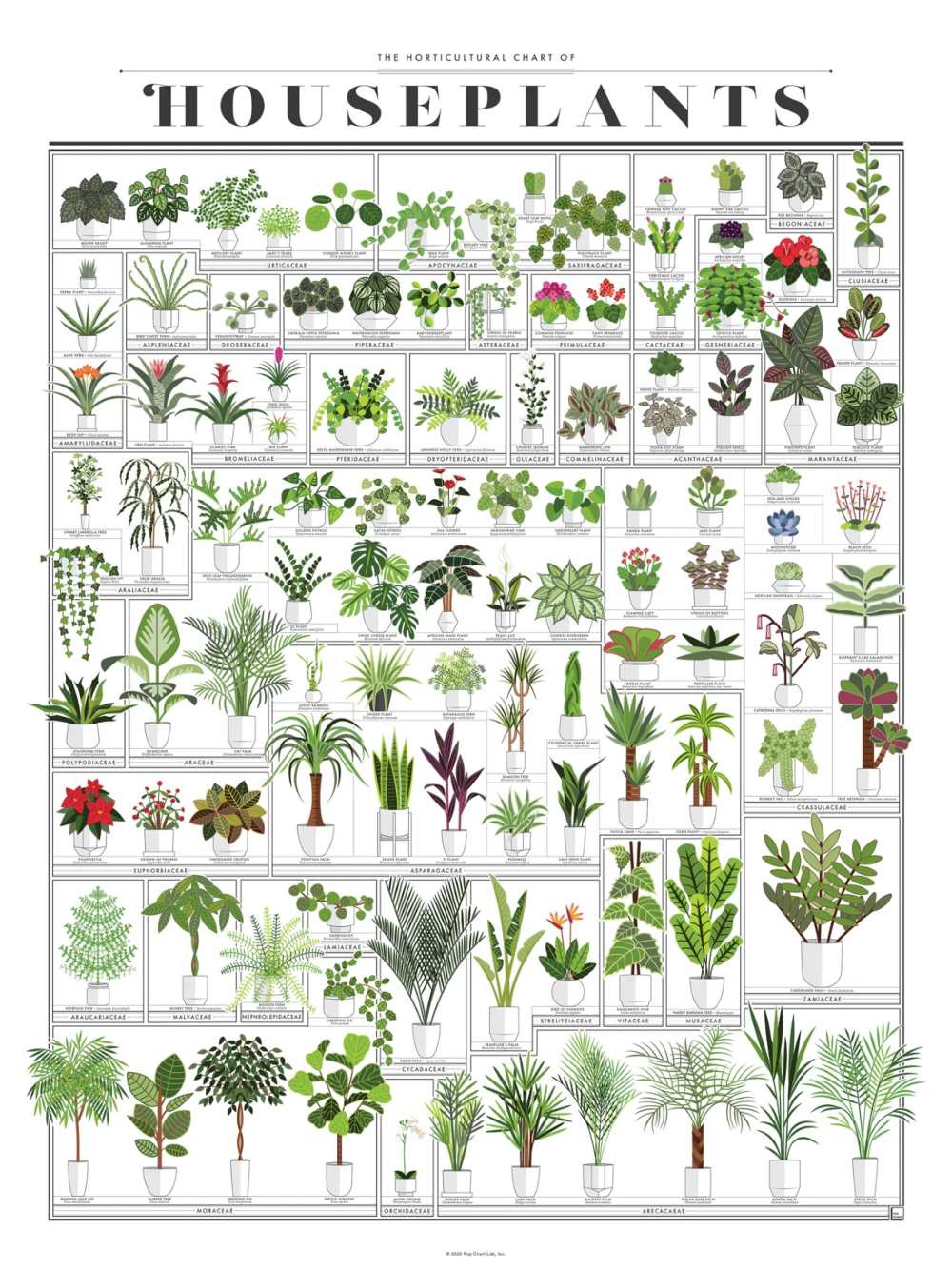 The Horticultural Chart of Houseplants in 2020 | Common ...