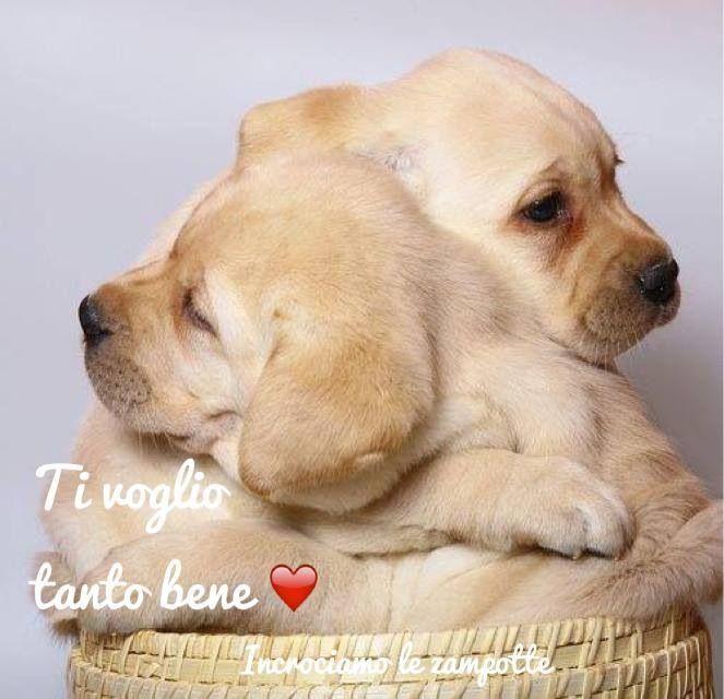 Ti Voglio Bene Hundebabys Susse Tiere Tiere Und Haustiere