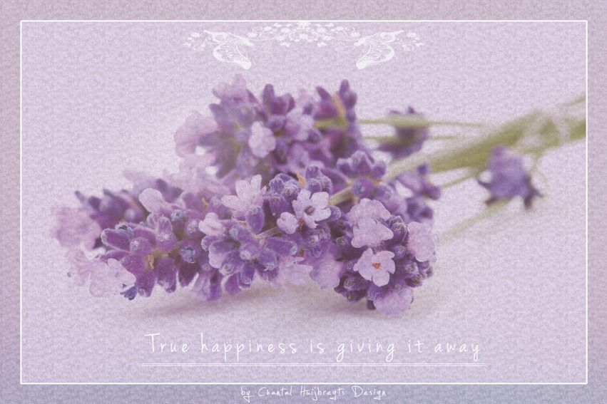 Card 20 Herbal Essential Oils Mother Earth Living Lavender Aromatherapy