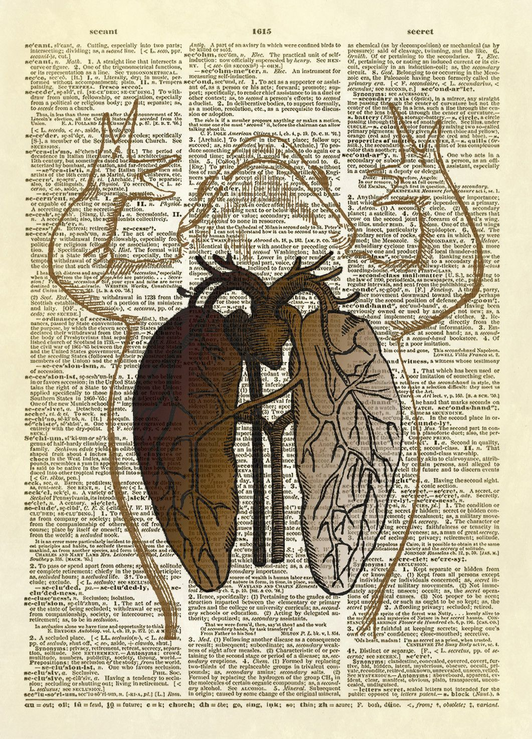 Frog Anatomy Diagram (Color Version) Dictionary Art Print ...