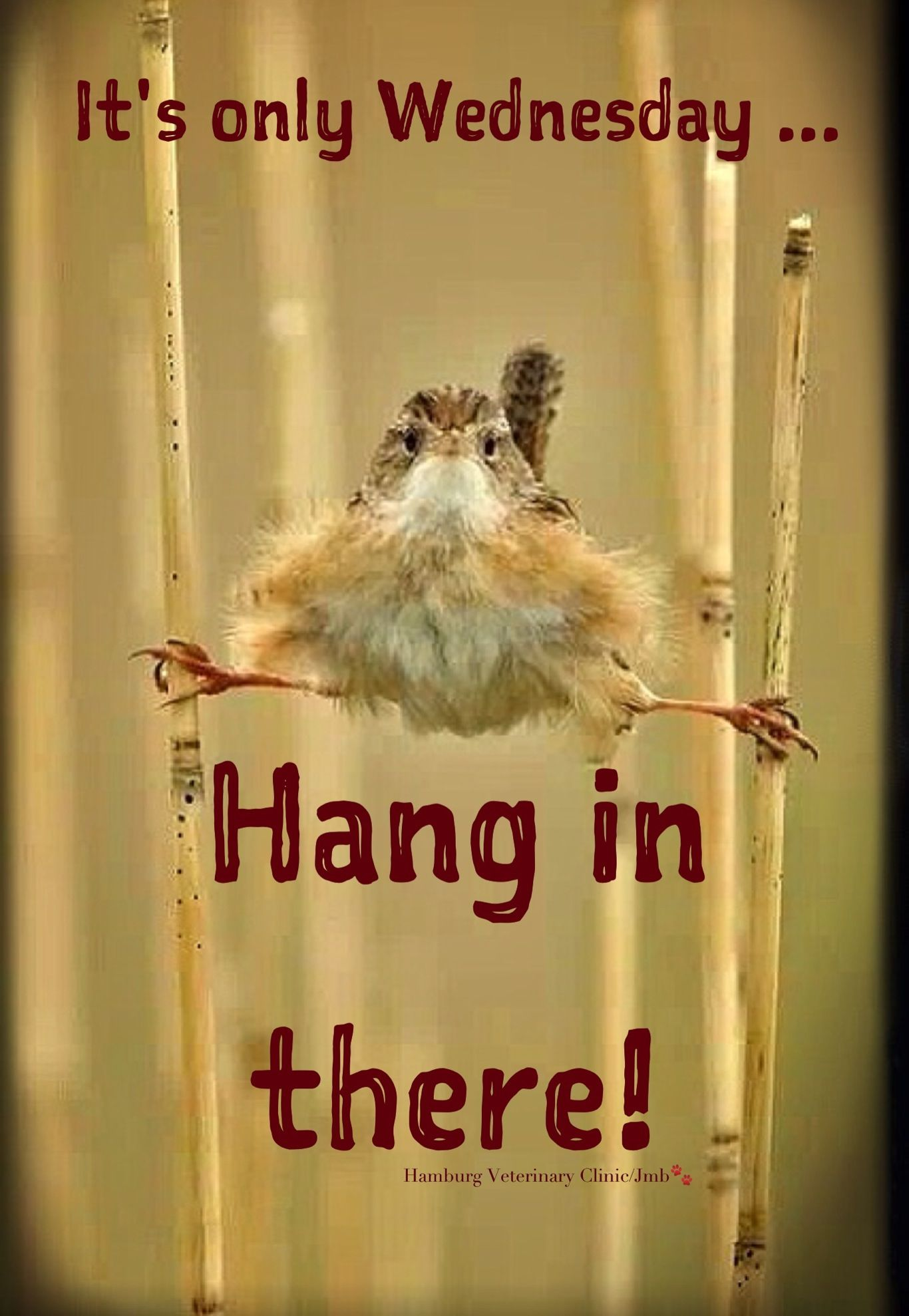 Wednesday Quotes Inspirational Humor: Animal Funny: Happy Wednesday! Hang In