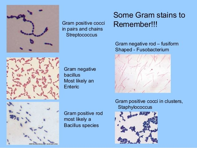 Rare Gram Positive Cocci In Clusters Images Google Search
