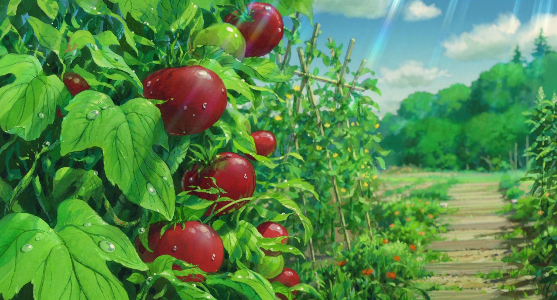 Tomato Plants imagens) As memórias de marnie