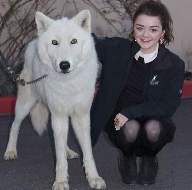 A Lady And Her Dire Wolf: Arya Stark (Masie) With Ghost