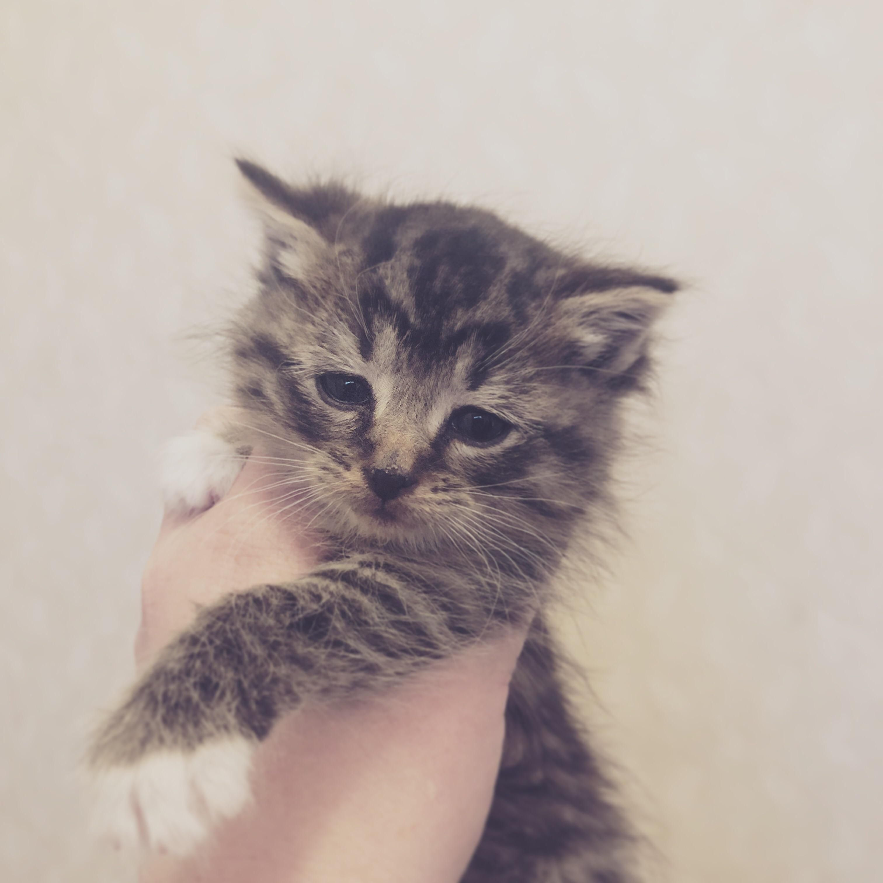 What Breed Is My Kitten Hello There Bright People Are You Catlover Or Have You Any Pretty Cats I Think You Love A Kitty Face Kitten Cat Lovers Cats