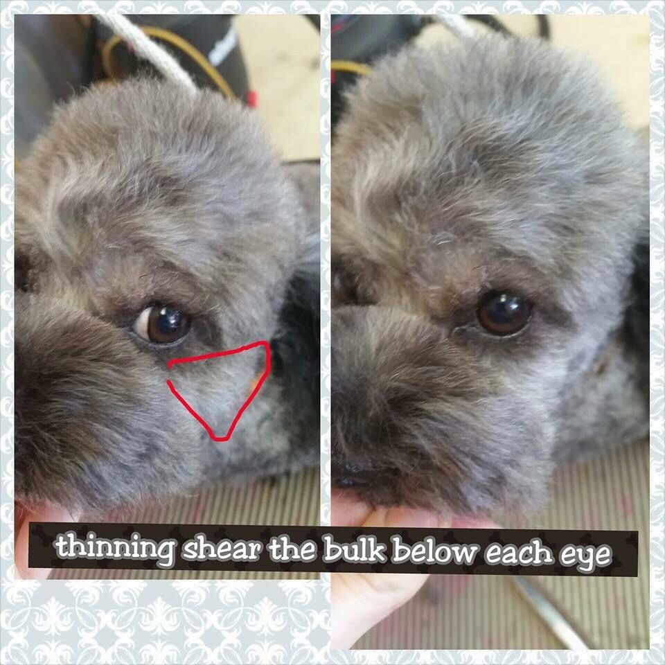 Asian Style Head Grooming Step 4 Dog Groomers Dog Grooming Diy Pets