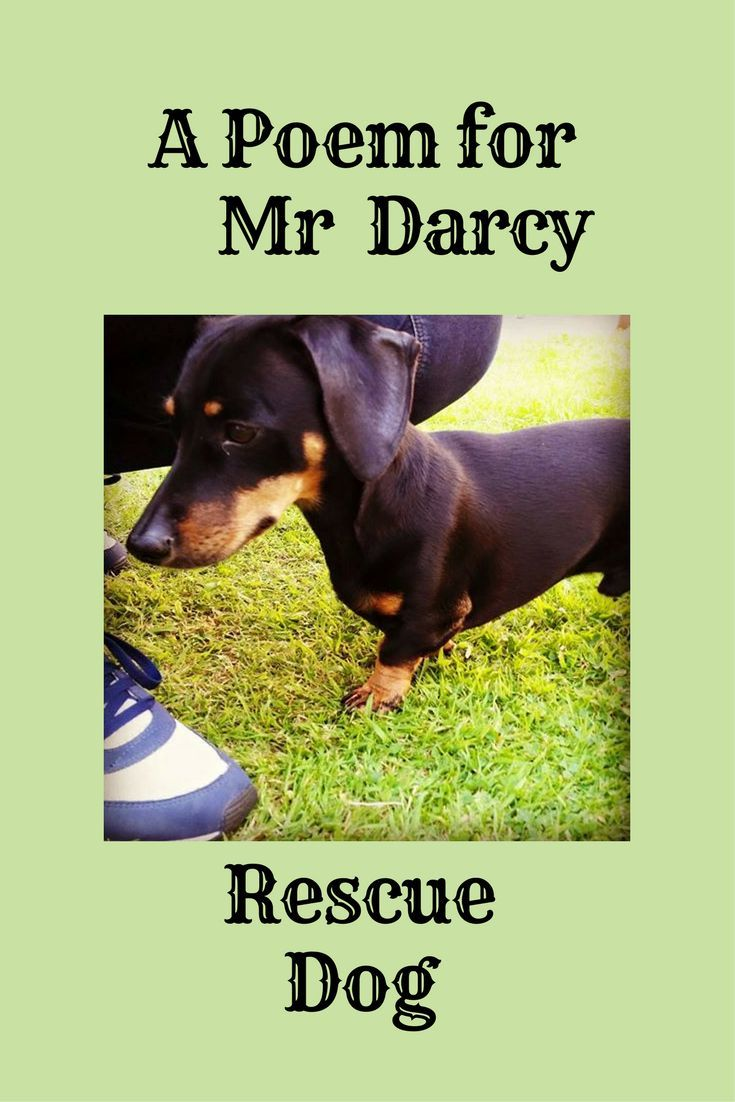 A Poem For A Rescue Dog By Kate Hanford Rescue Dogs Dog Poems Dogs