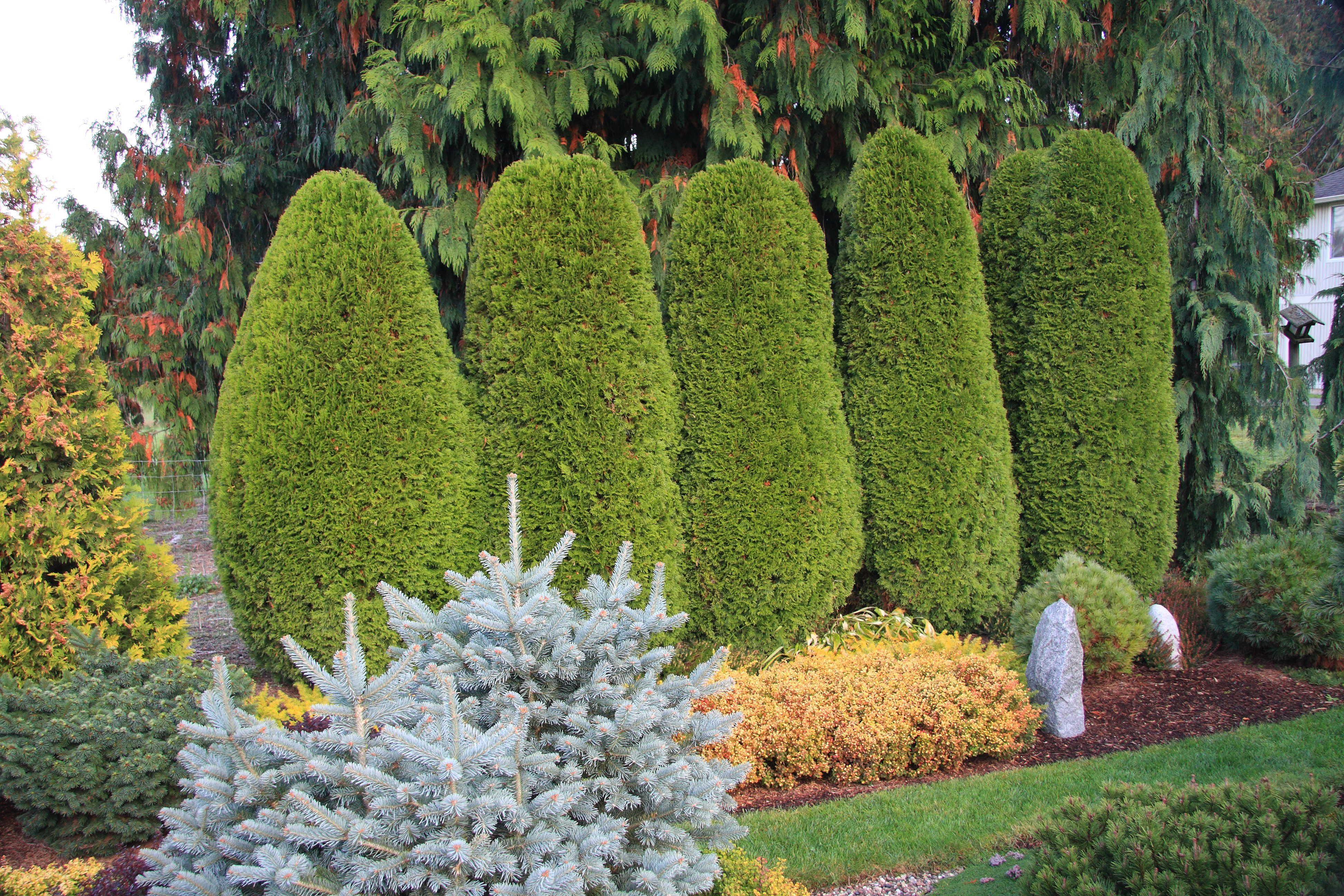 818209576625e73b63b4946868cecefc - Edgar's Gardening And Tree Service