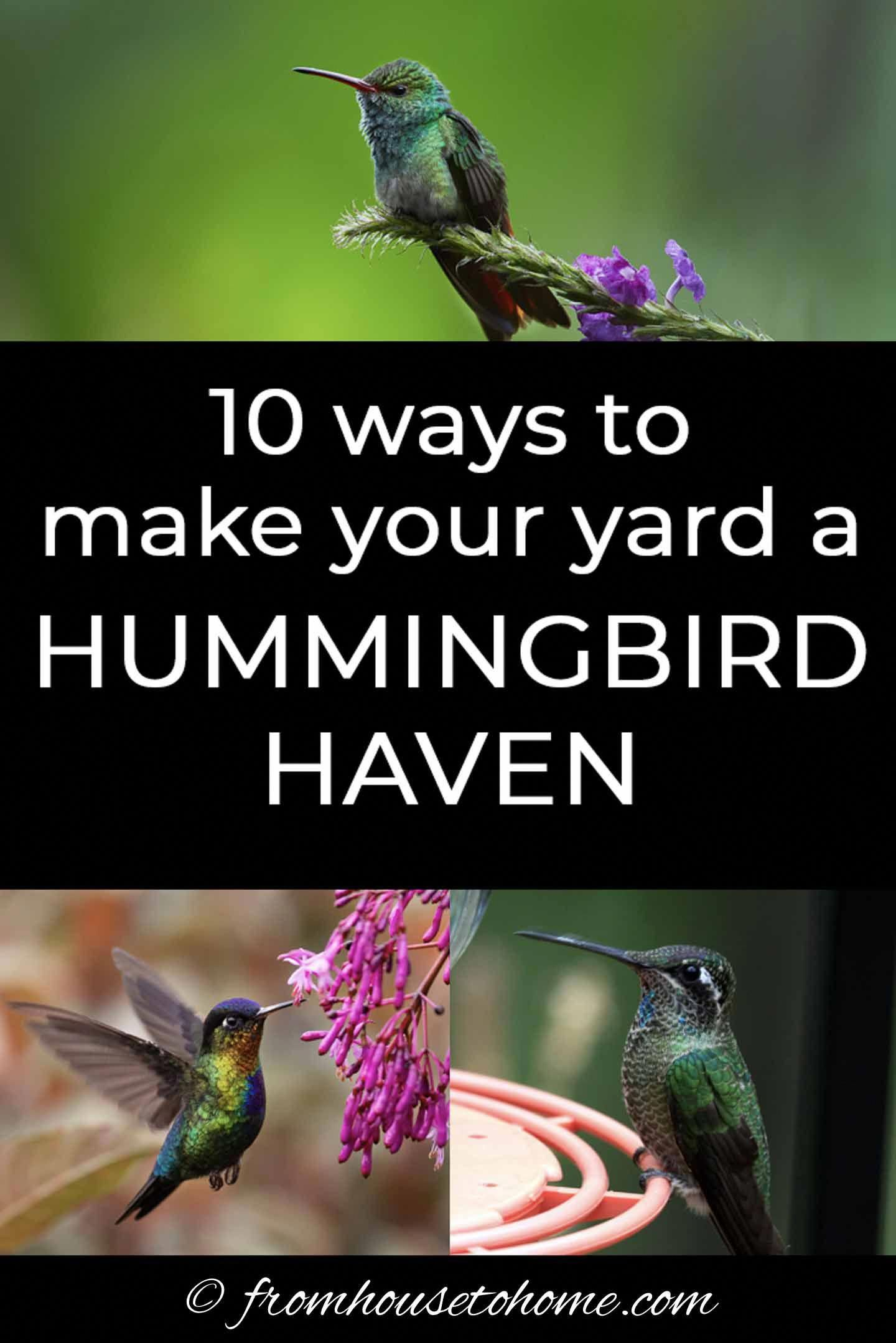 Attracting hummingbirds to your garden is not as difficult