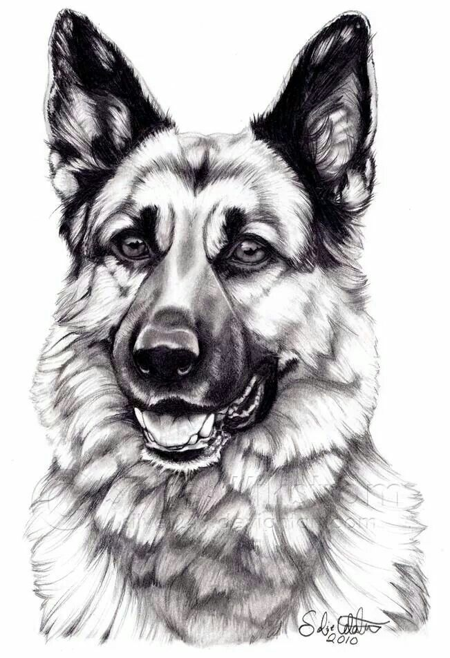 Gsd Drawing Gsd Pics In 2018 Pinterest German Shepherd Dogs - German-shepherd-drawings
