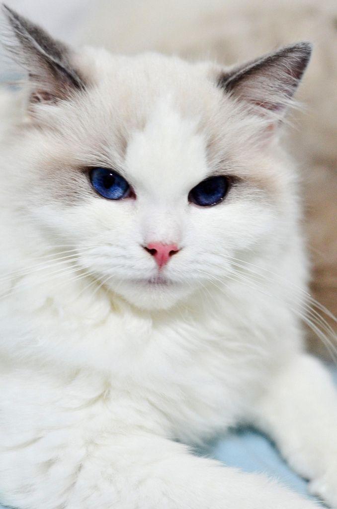 แบบน ซ แมว ตอนท 2 เพศและตาของแมว Http Www Petworldtoday Com E0 B9 80 E0 B8 9e E0 B8 A8 E0 B9 81 E0 B8 A5 E0 B8 B0 E0 Pretty Cats Beautiful Cats Cute Cats
