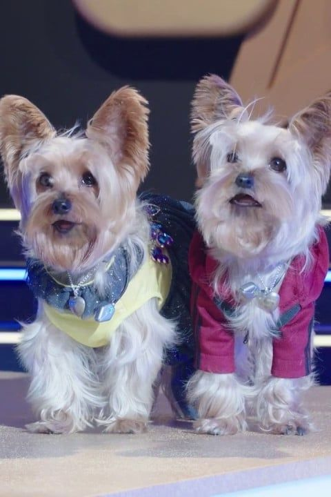 14 Pawsome Dog Movies on Netflix That Are Perfect For Your