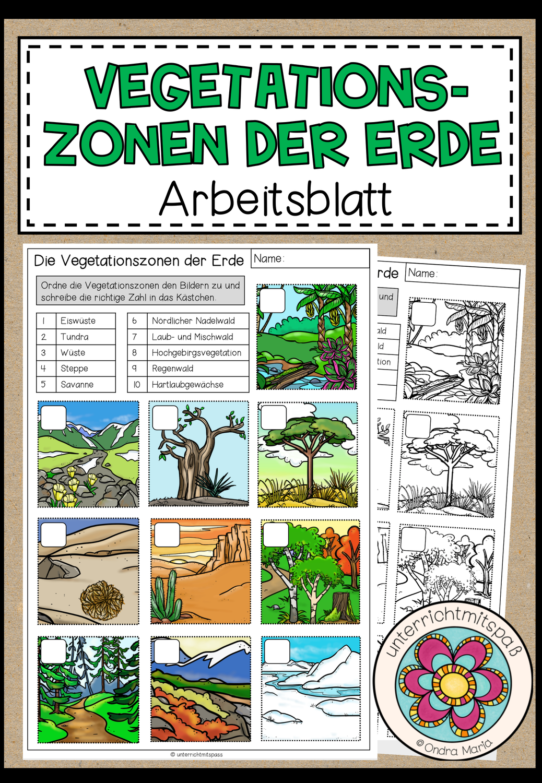 Vegetationszonen   Arbeitsblatt 20 fach differenziert ...