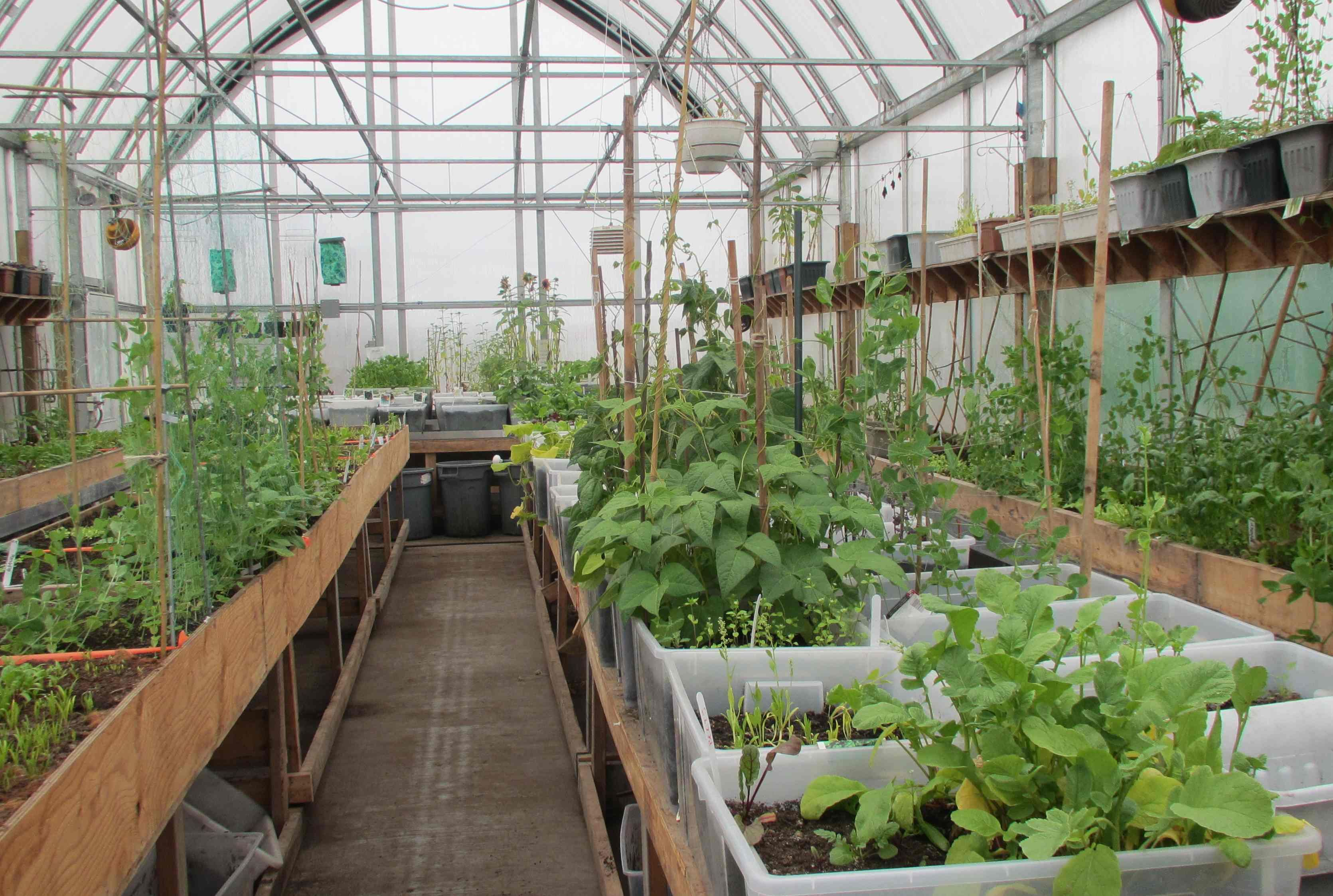 how to build an indoor greenhouse