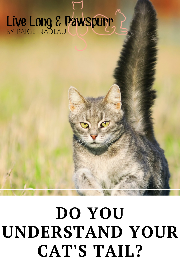 8 Things Your Cat S Tail Is Telling You Cats Cat Tail Language Cat Behavior