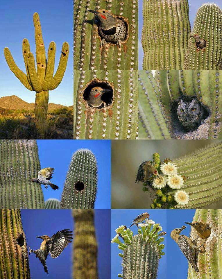 Animals That Live in a Cactus Desert animals, Desert