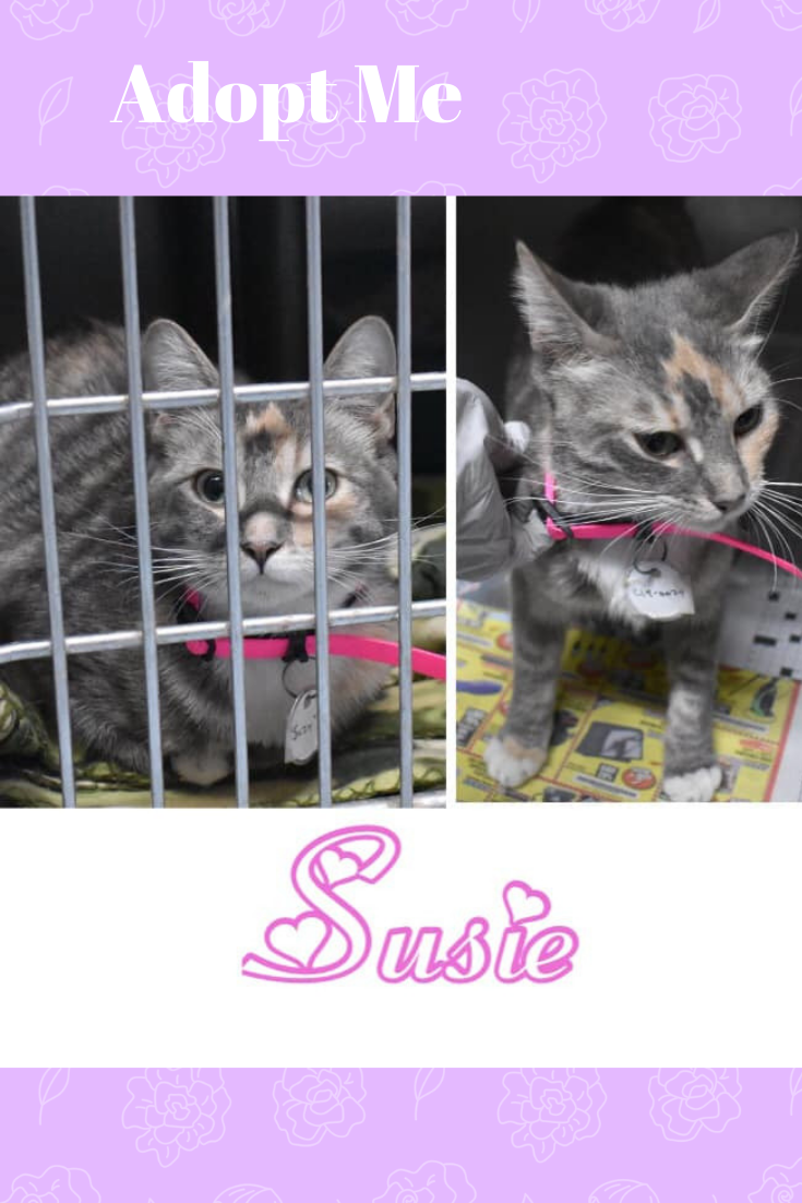 Susie Is Available For Adoption Pretty Cat Kitty Cat Crazy Cat Black Cat Beautiful Cat House Cat Fluffy Cat Cat With Images Kitten Adoption Cat Adoption Sick Pets