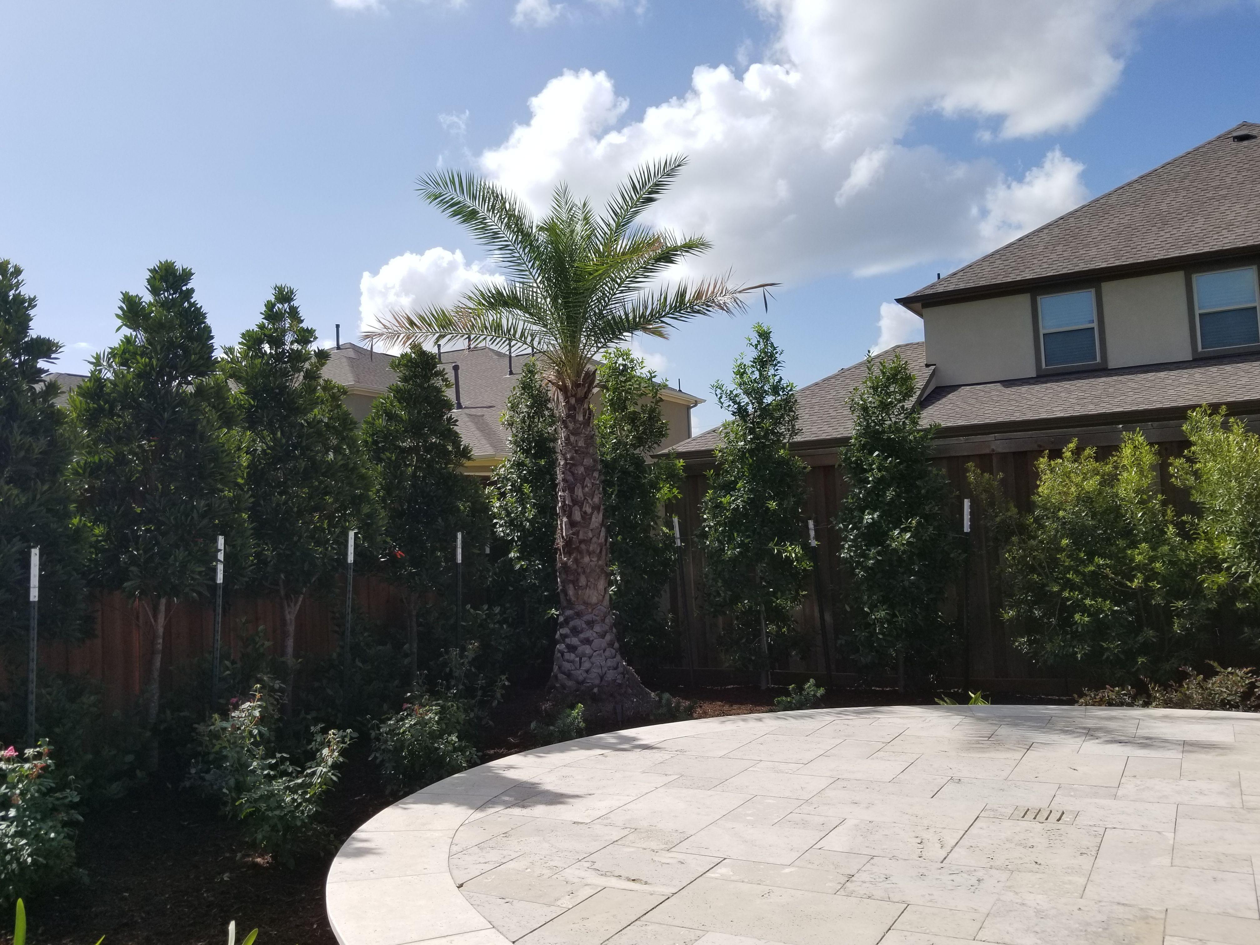A Palm Sylvester And Privacy Hedge Landscape Services Landscape Dream Landscape