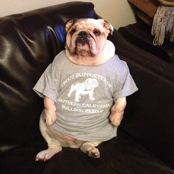 Got My Southern California Bulldog Rescue Shirt Today I Love And