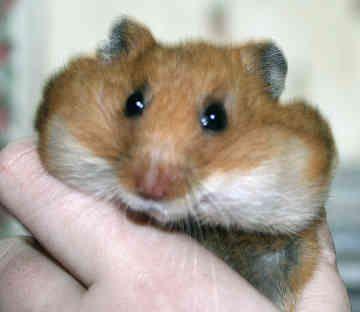 Gledwood Vol 2 (Main blog): April 2011   Critters   Pinterest   Animal, Hamster stuff and Funny ...