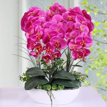 100Pcs Phalaenopsis Seeds Living Room Interior Decoration Flowers ...