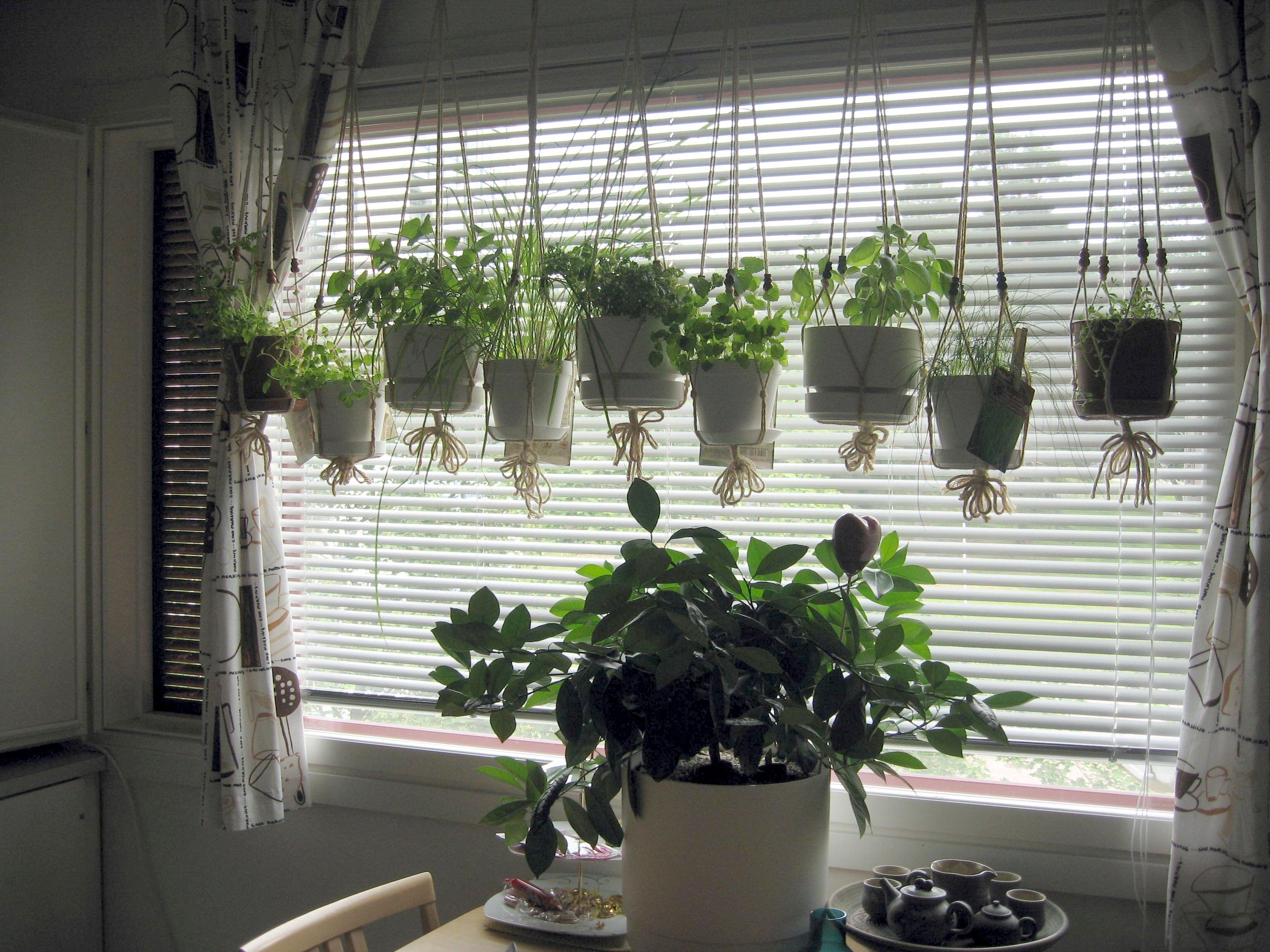 10 Kitchen Window Garden Ideas Amazing As Well As Stunning Window Herb Garden Herb Garden Pots Indoor Herb Garden