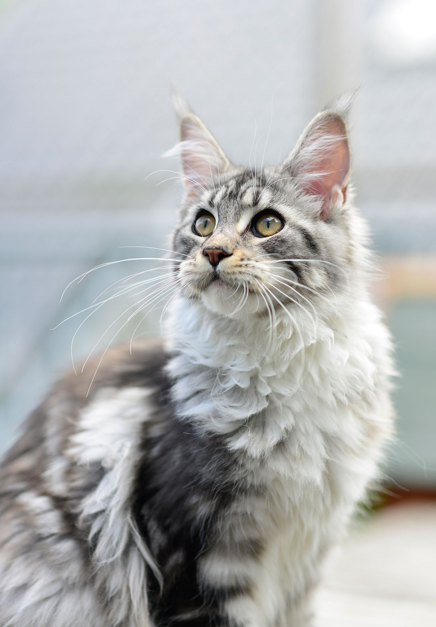 Experts Say These Are The Smartest Cat Breeds In 2020 Cat Breeds Best Cat Breeds Cute Cats And Dogs