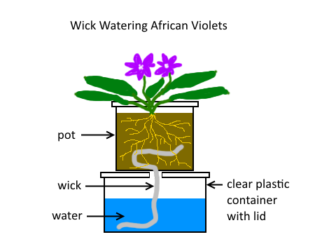 Diy Self Watering Pots And Mini Wicking Beds Self Watering Pots