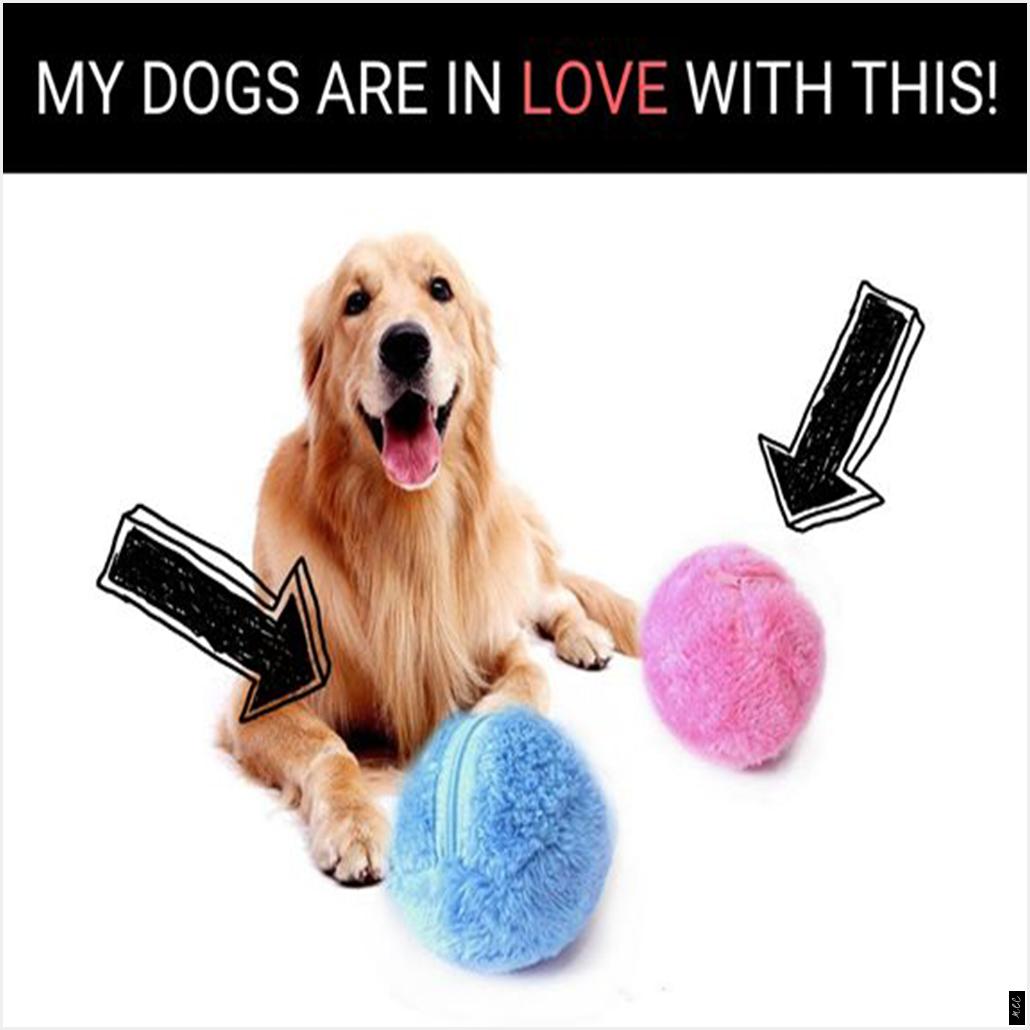 Stellen Sie Sicher Ihr Hund Bleibt Gesund Aktiv Und Unterhalten