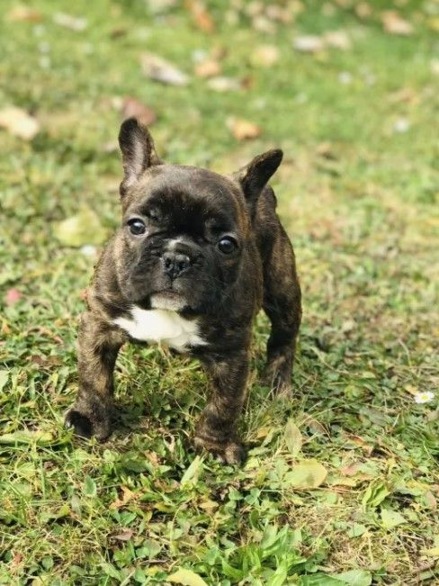 160 Dog Names that Start with M Dog names, Female dog