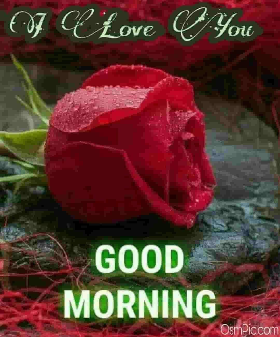 Good Morning I Love You Images With Roses
