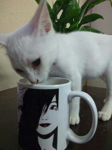 Pin By Rosana Raven On Cats In The Cradle Tableware Mugs Kitchen