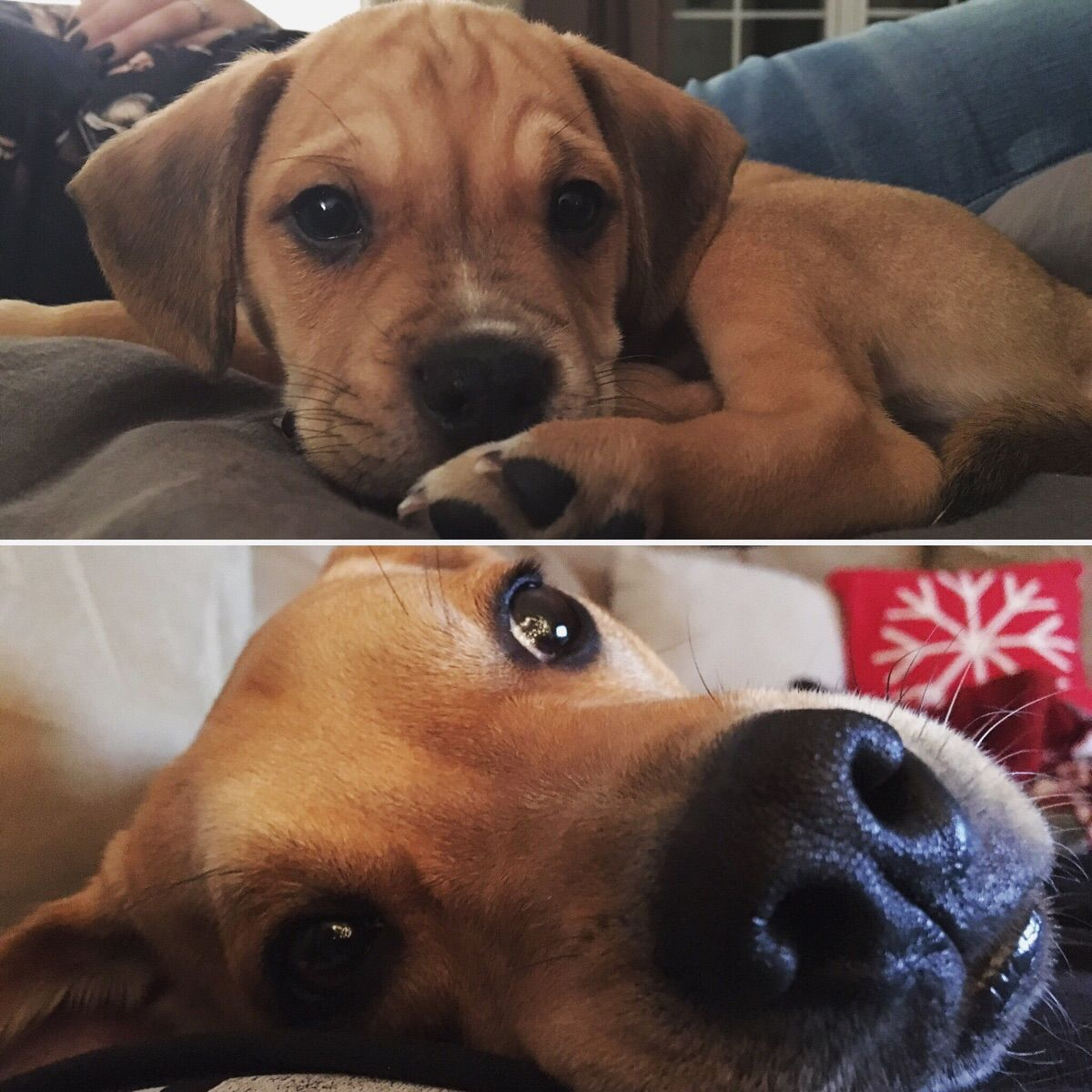 Beau turned 1 this month! Here is his 10 month difference. http://ift.tt/2ivdkwO