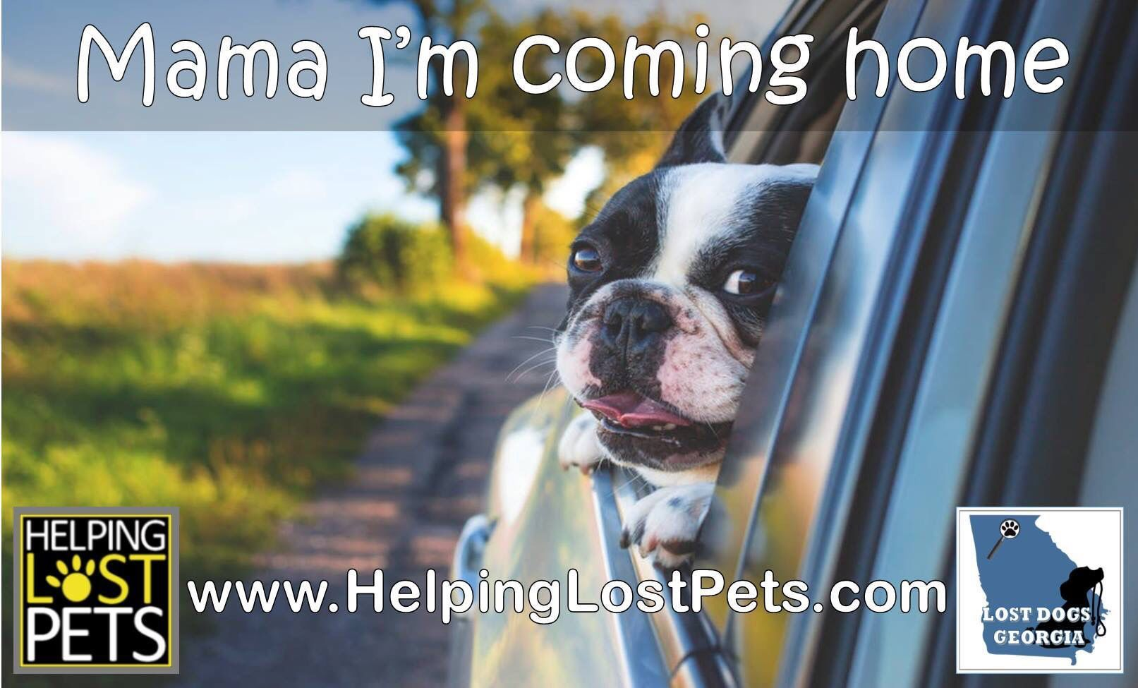 Helping Lost Pets Makes More Reunions Possible Let Us Help You In