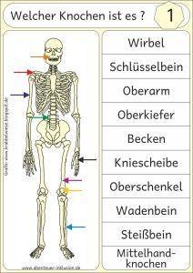 das menschliche skelett abenteuer inklusion grundschule menschliches skelett. Black Bedroom Furniture Sets. Home Design Ideas