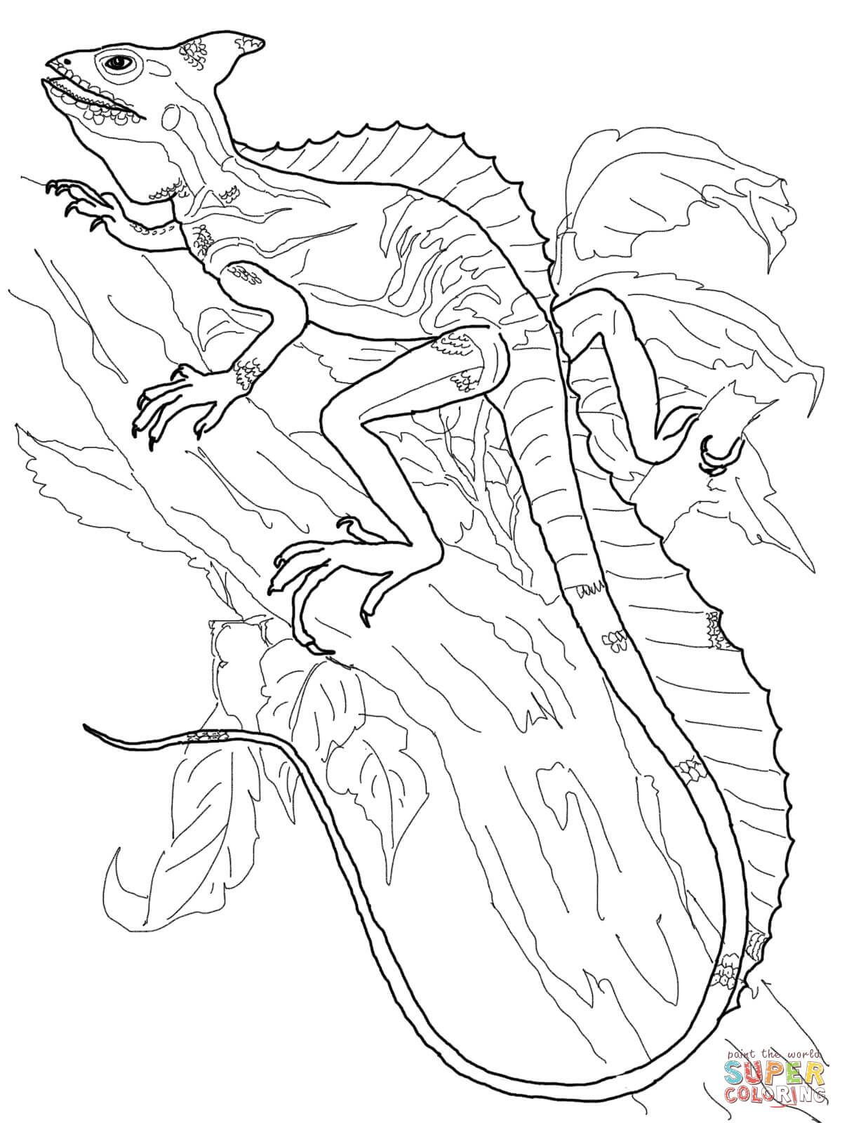 Basilisk Lizard Coloring Page Free Printable Coloring Pages