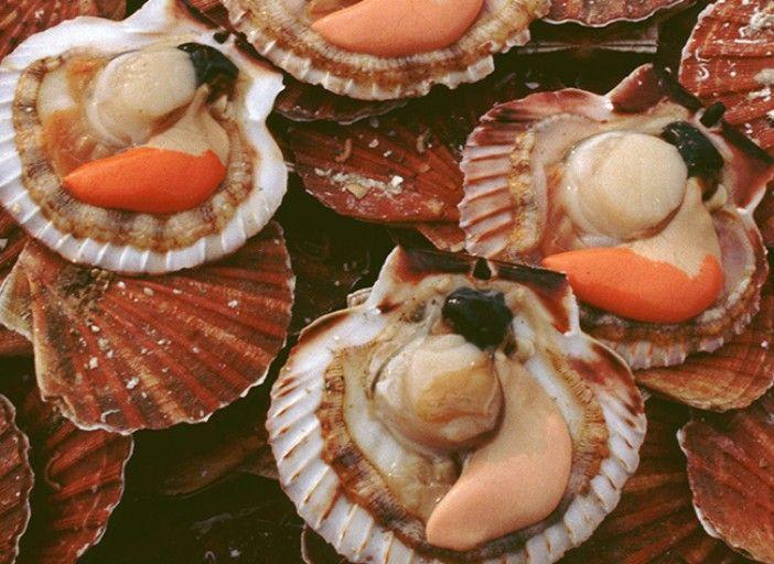 Bienfaits et recettes base de saint jacques fish seafood receipies poisson saint jacques - Comment cuisiner des palourdes ...