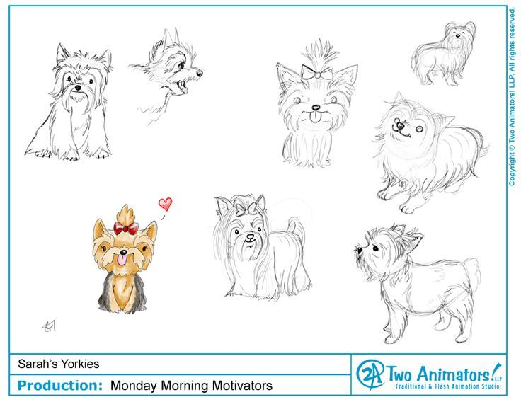 How To Draw Yorkshire Terriers Step By Step Hledat Googlem