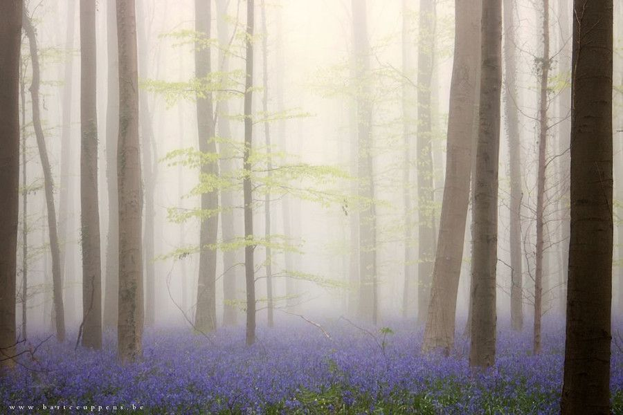 Photo into the mystic 3 by Bart Ceuppens on 500px