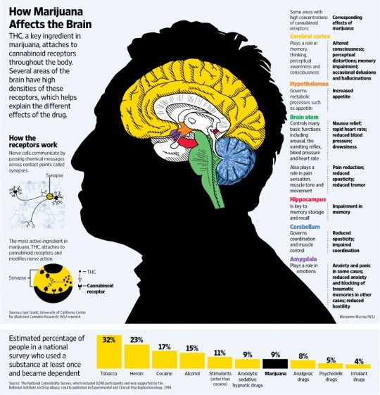 How marijuana affects the brain 420 pinterest brain cannabis drugs in the workplace effects of marijuana on the brain facts about human brain how marijuana affects the brain ccuart Image collections