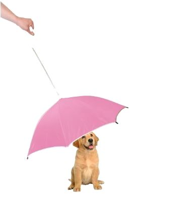 Umbrella With Reflective Lining And Leash Holder! Order yours here ➩➩   http://amzn.to/2qqGj9w