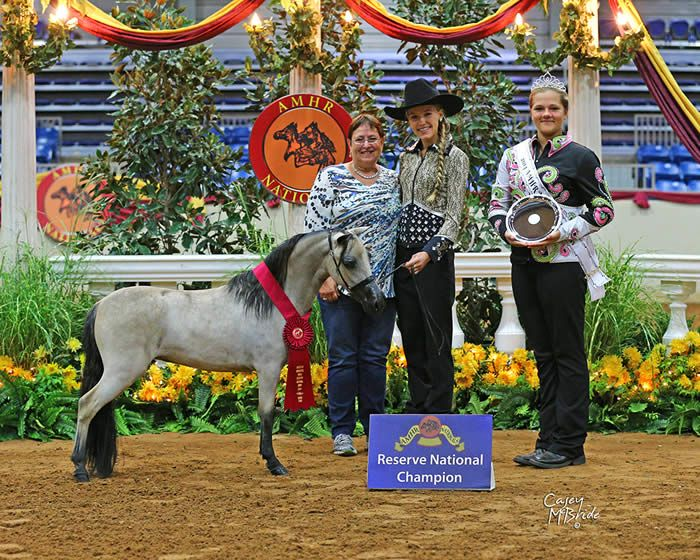 """This mare is a proven WORLD Res Champion! And comes from the distinguished """"Bay Prince"""" lines!! Offered by Mini Horse Sales"""
