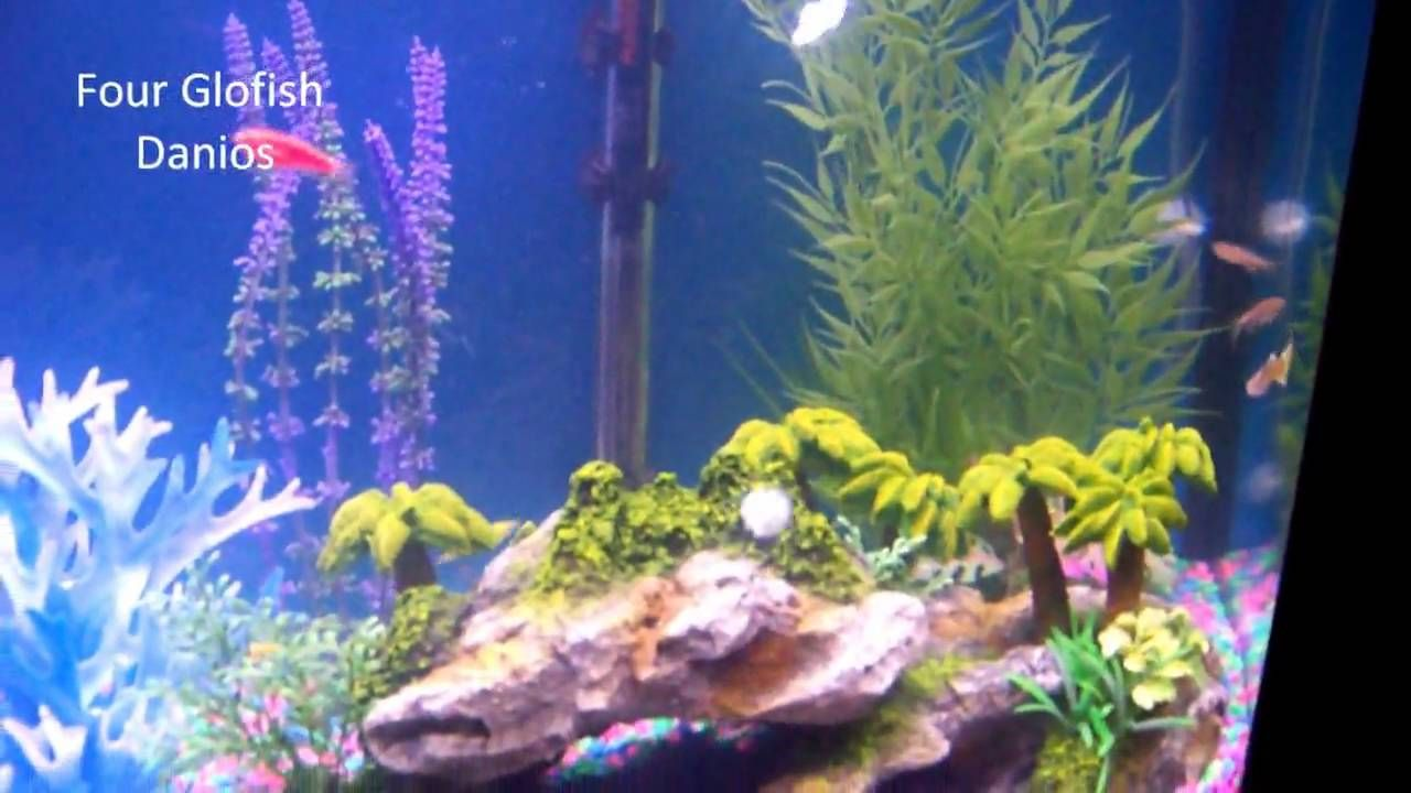 Freshwater aquarium fish capacity - The Goal Here Was A Colorful Lively Aquarium This Is A 26 Gallon Bow Front Tank Twelve Fish So Far And Approaching Capacity